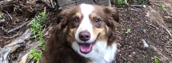 Dog Stolen from Upper East Side Apartment